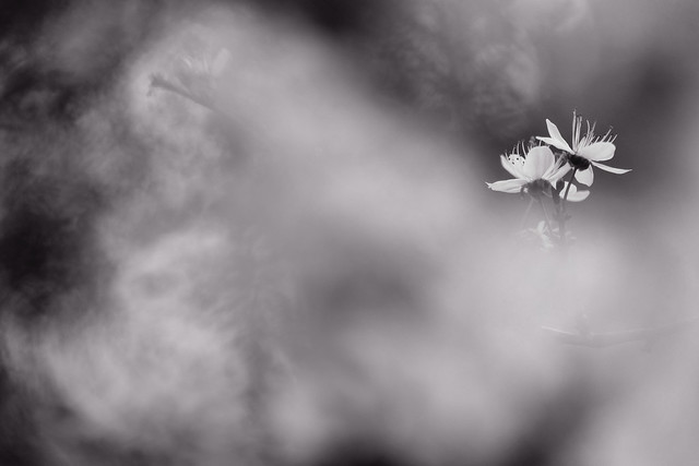 Poème, mots pollen