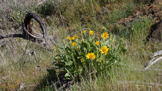 _DSC9286 (2)Along The Trail...