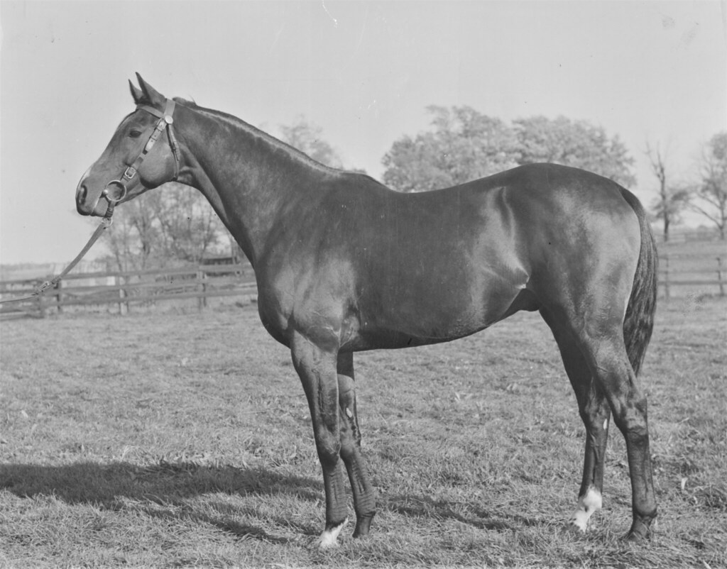Keeneland Library Thoroughbred Times Collection-Meadors-Market Wise, undated