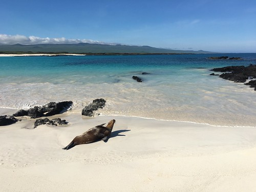 Hanging with the sea lions on San Cristobal, Galapagos Islands. From Leaving Home to Find Ourselves, by Britt East