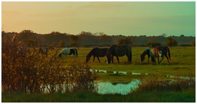 Crazy Horses
