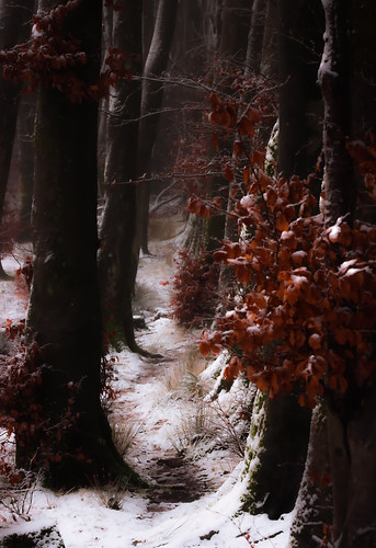 fairytale ethereal dreamy fantasy foresttrail snow ice winter beech trees tree avenue nature woodland forest enchanted canon telephoto landscape