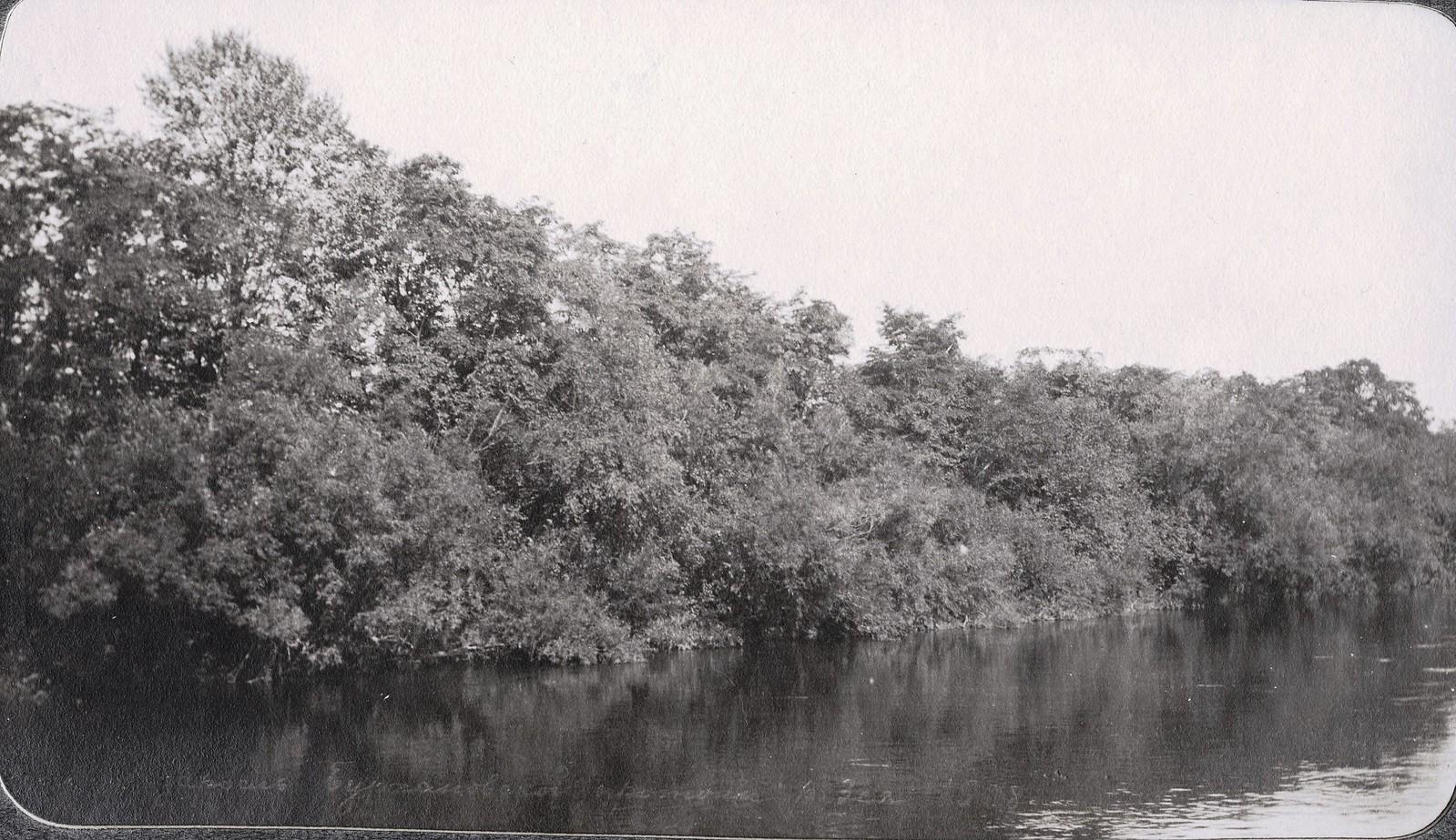 Вид зарослей в протоке реки Бурхановки
