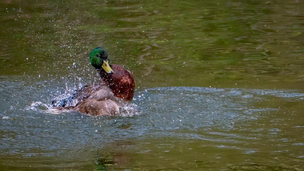 Tempête et sérénité sur l'étang... 51103020636_0d1670317f_b