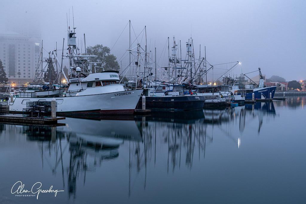 Fleet in the morning fog 1