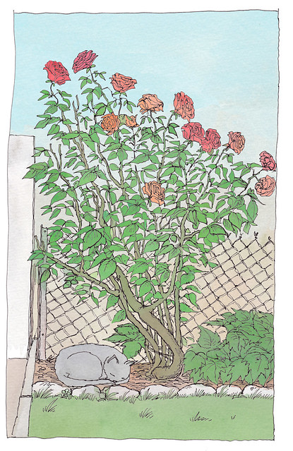 A nap under the rose tree