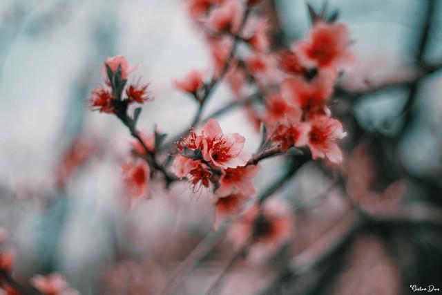 Spring unlocks