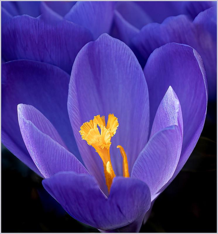 SGajda_Flowers 01