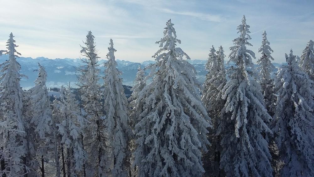 2021-01 Schneeschuhtour Atzmännig