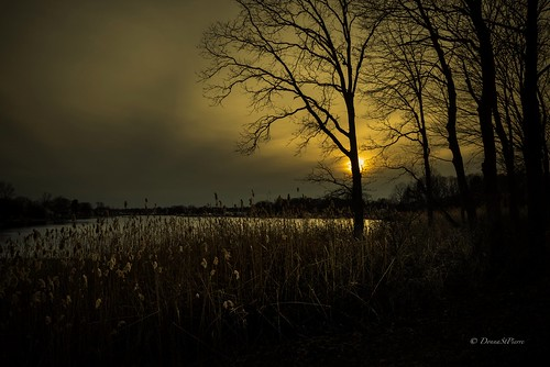 newengland spring warwick rhodeisland conimicut sunset photographer photography moody mysterious trees landscapephotography landscape weather traveling travelnewengland visitrhodeisland visit newenglandphotography silhouettes travel