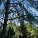 YDH_4723_20210227_Botanic Garden_NikonNIKON D750.jpg
