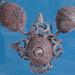 Nálezy z Levého Hradce, foto: Petr Nejedlý