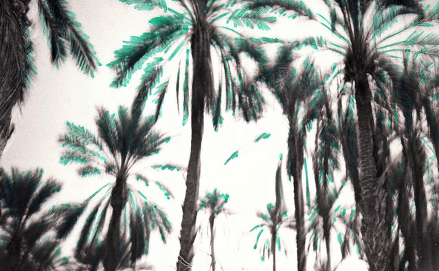 Rêve de palmeraie