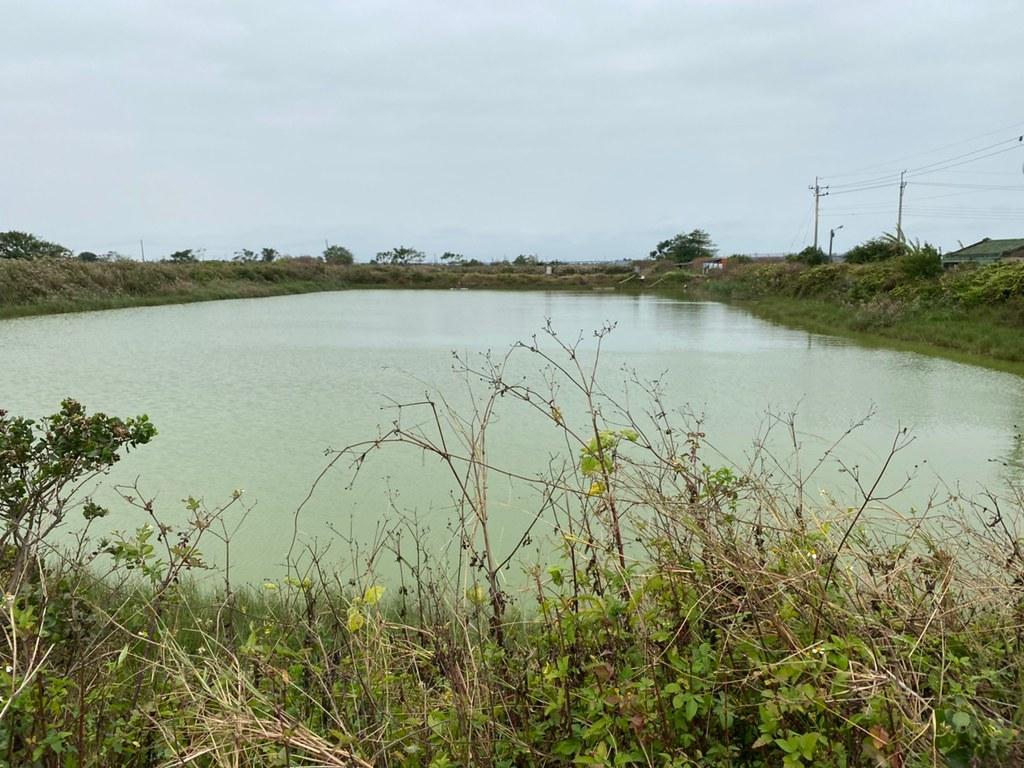 大亞綠能科技於台南是七股區三股子段的漁電共生案場現地照片。圖片來源:聚恆科技提供