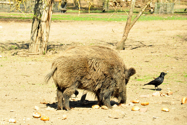 Tiergehege im Rheinauer Wald, Mannheim_4_Brigitte Stolle