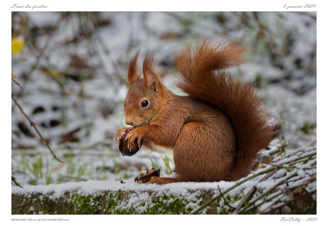 L'écureuil | The squirrel