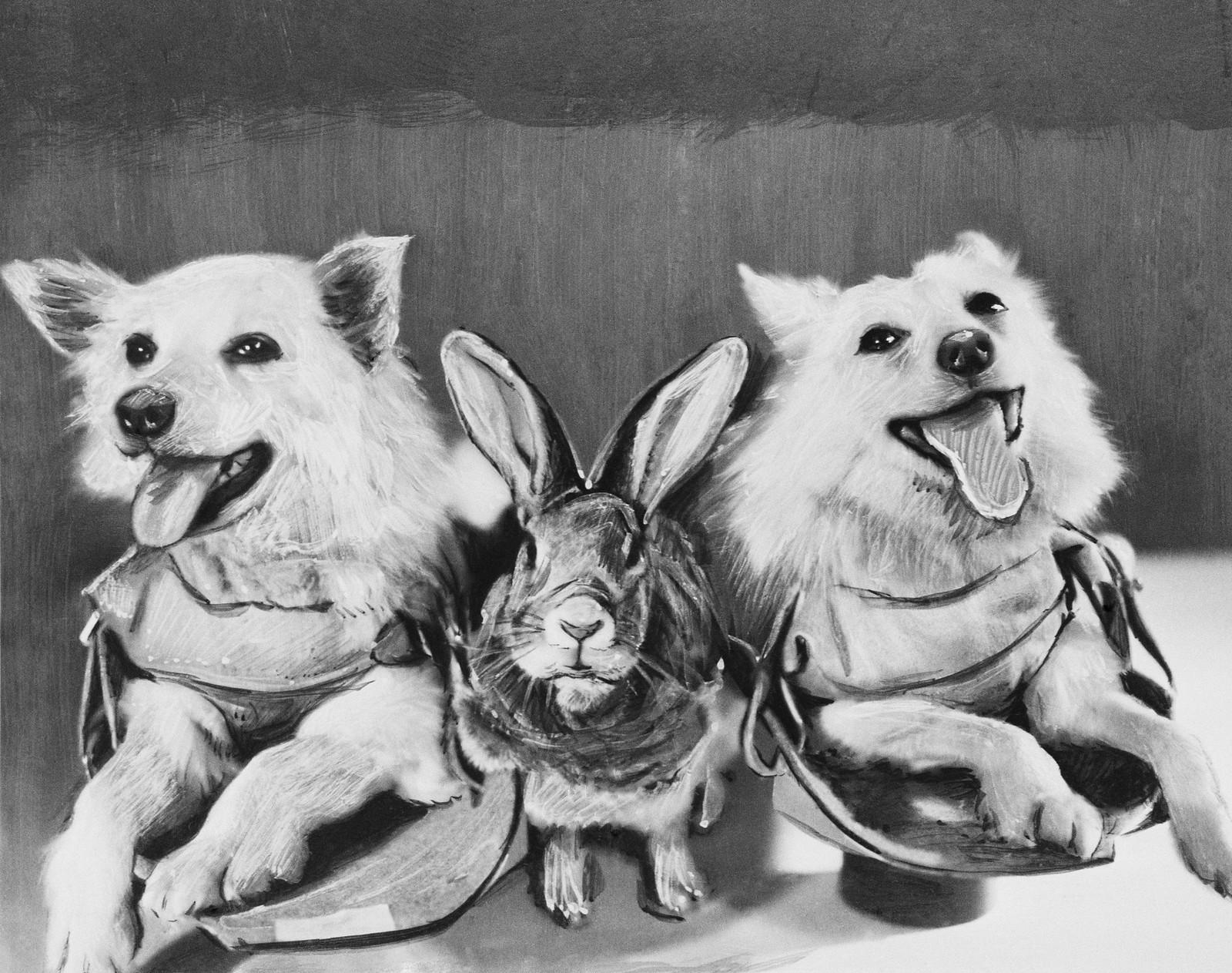 1958. Собаки Отважная, Снежинка и кролик перед полетом на геофизической ракете в верхние слои атмосферы