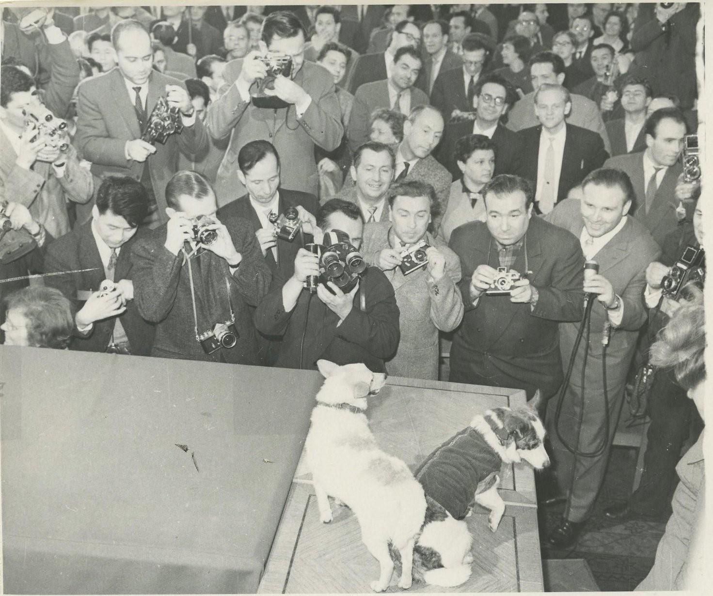 1961. Демонстрация собак Белки и Стрелки на пресс-конференции для журналистов. 28.03