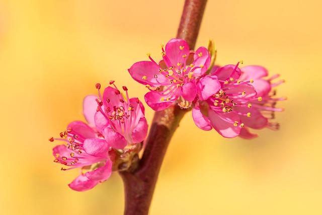 Brilliant blossom