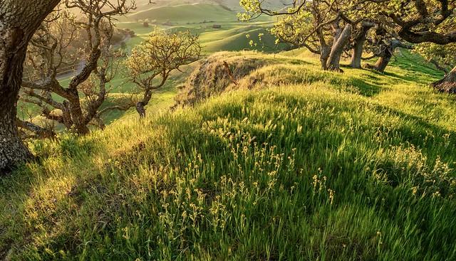 Bluffs at Alhambra Valley