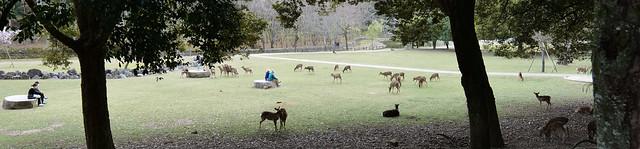 Nara Park, Spring walk-2 @Nara,Mar2021