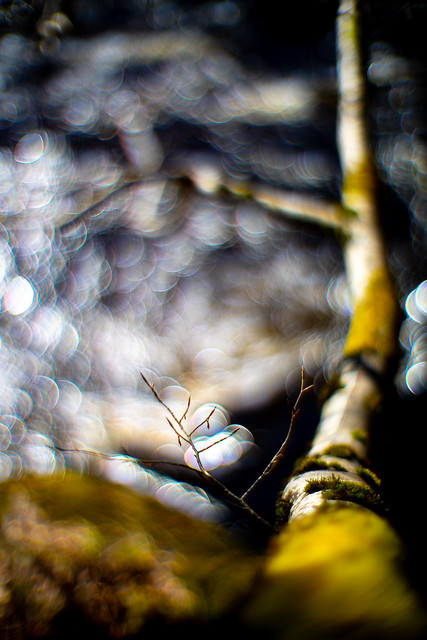 Branch over river - abstraction