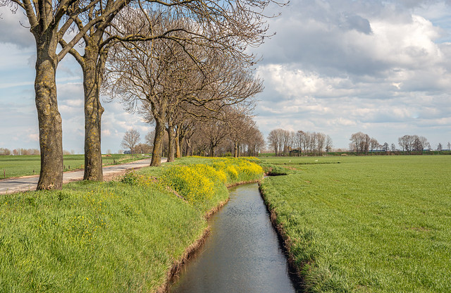 Spring in the Dutch countryside