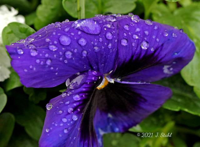 Droplets- Mar 28 (2)