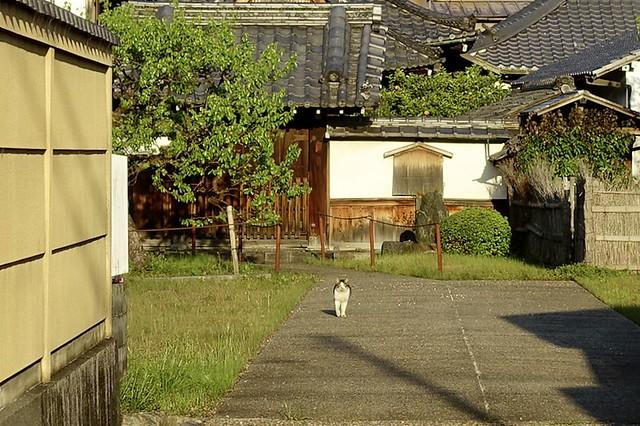 Today's Cat@2021−04−09
