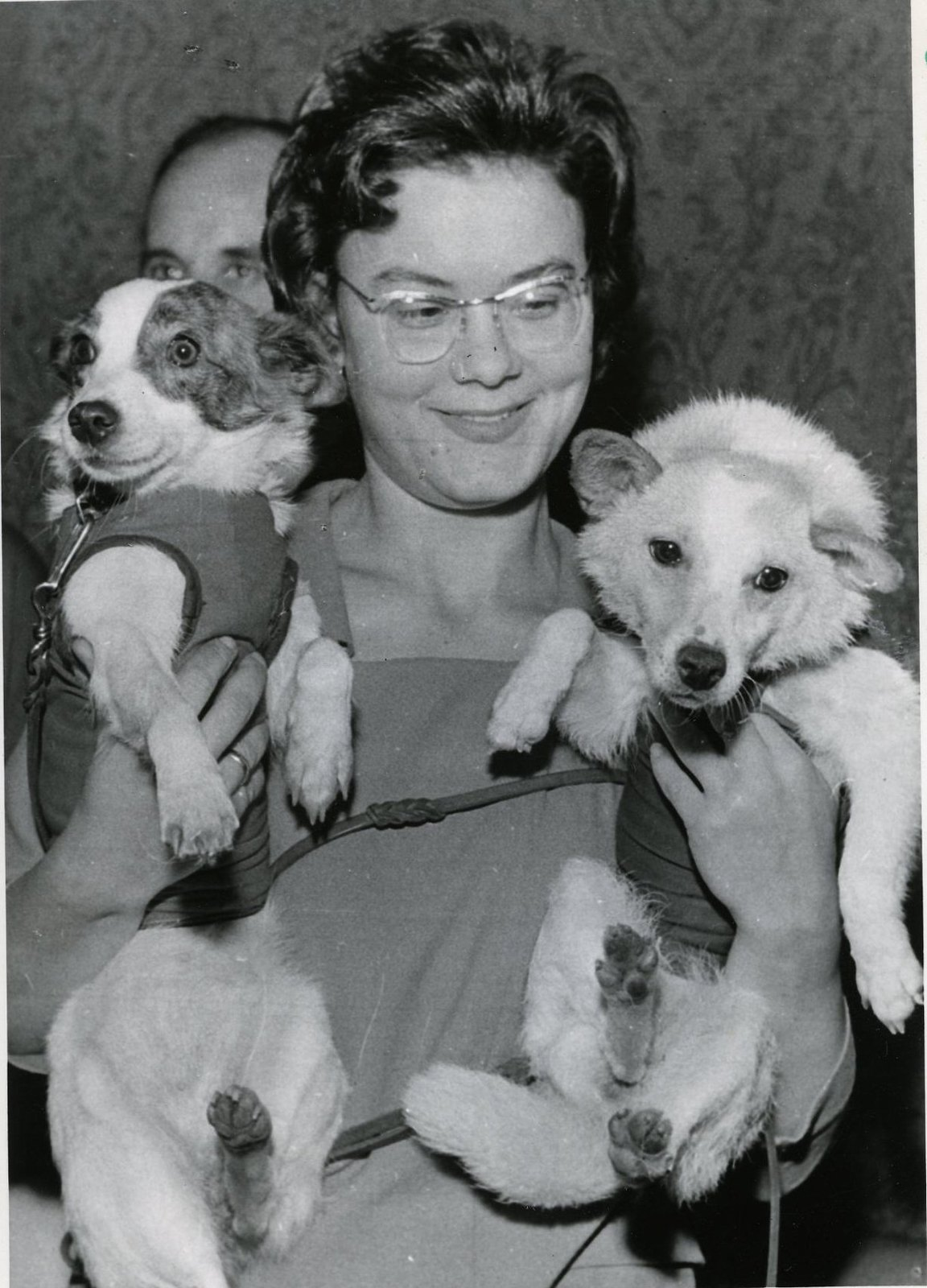 1966. Журналистам демонстрируют собак Белку и Стрелку