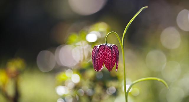 Friday flower power