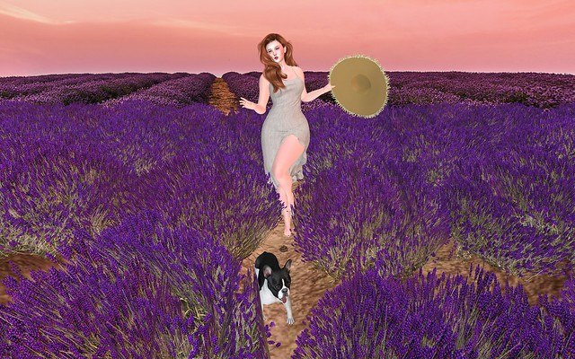 Lavender Fields - It Happens