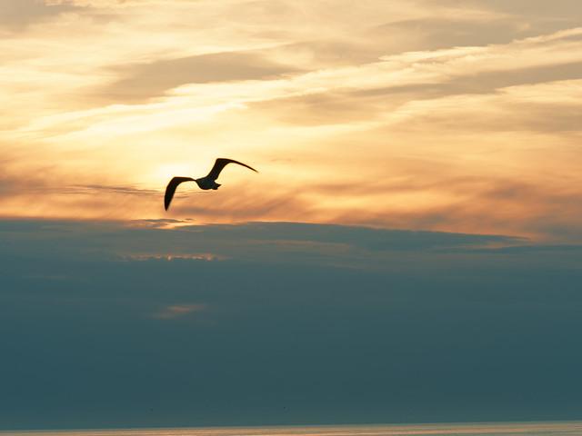 Silhouette d'oiseau au-dessus de l'Océan Atlantique