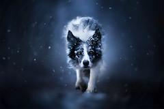 Eternal Winter  (由  Alicja Zmysłowska