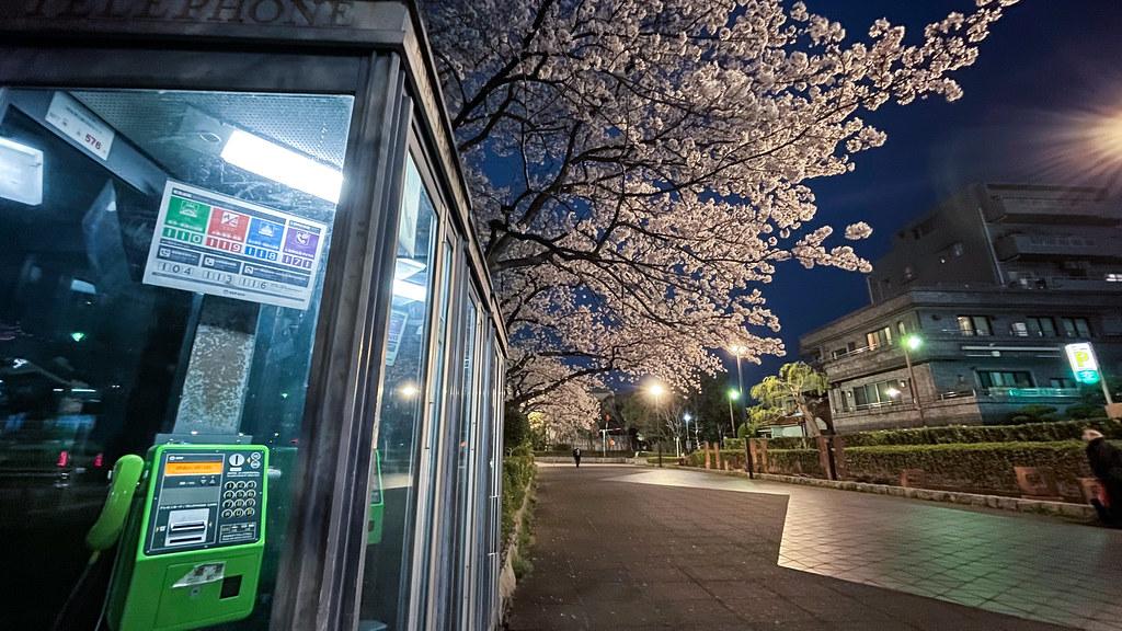 夜桜 by iPhone 12 Pro_03