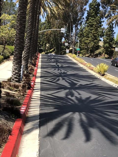 09-Apr  Palm Shadows