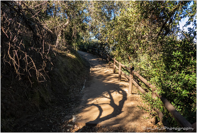 Shadows on the Trail...