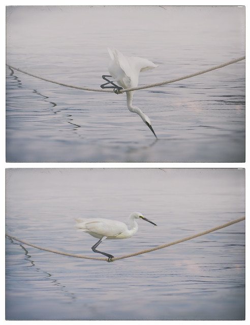 rope fishing