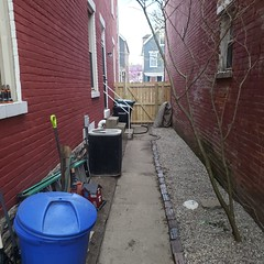 Our side yard