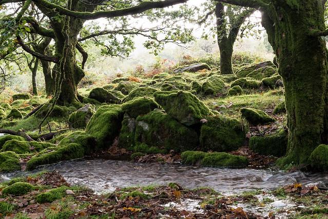 Woodland deluge - NK2_8432