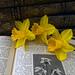 2021 04 03 - daffodil still life