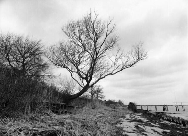 Træet på stranden
