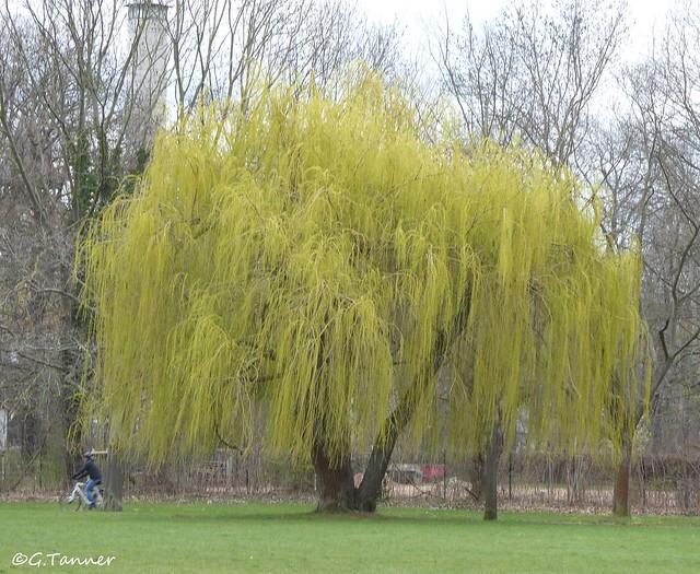 Frühling in Halle Saale
