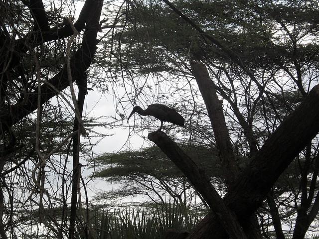 Ethiopia 317 Awash national park