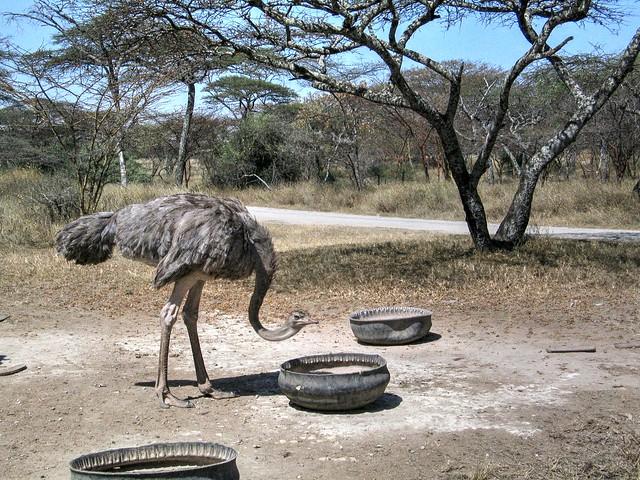 Ethiopia 341 Countryside