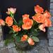 09.04.2021: NaturFreunde-Gedenken an Georg Elser