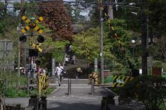 Engaku-ji, Japan, April 2016