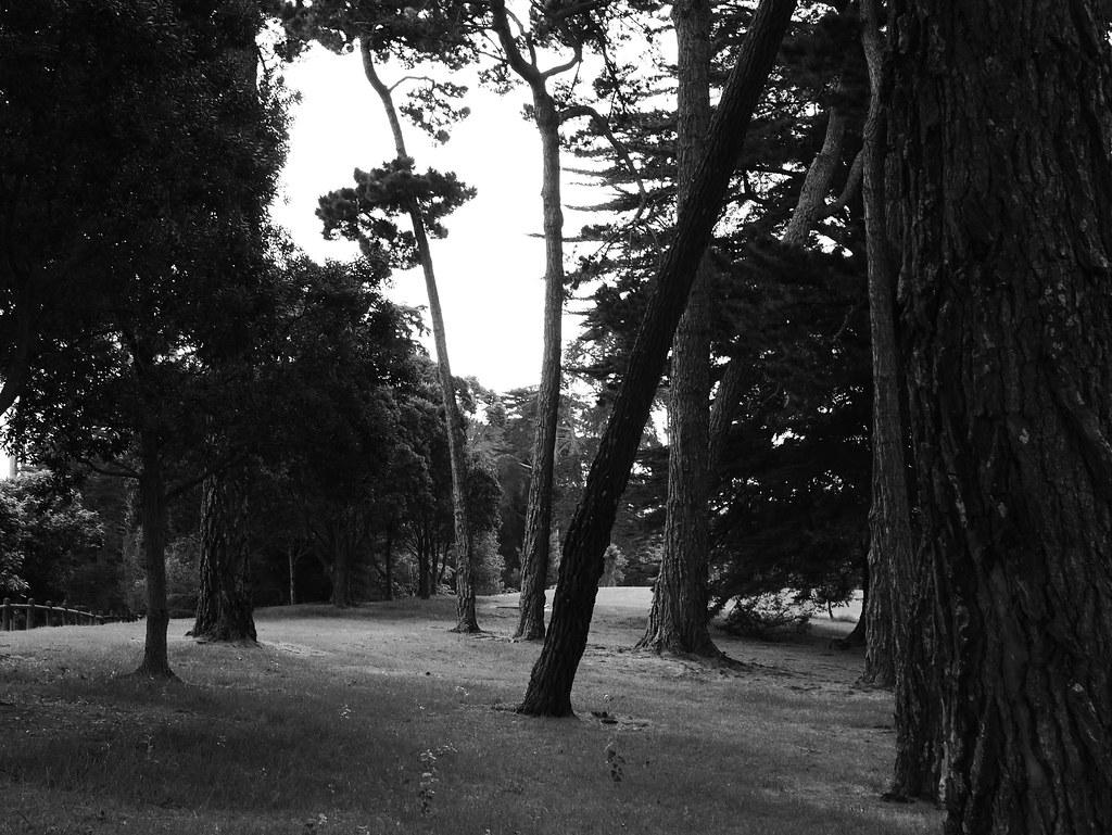 Trees in Schnapper Rock