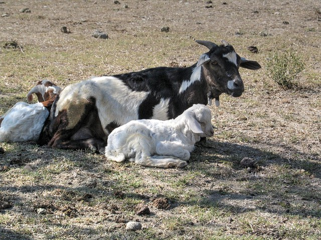 Ethiopia 335 Countryside