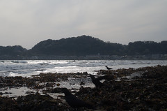 Kamakura Yuigahama beach, Japan, April 2016